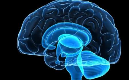 Ученые узнали как затормозить старение мозга